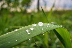Ranek rosa na świeżej wiosny zielonej trawie zdjęcie royalty free