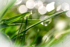 Ranek rosa na świeżo r zielonej trawie obrazy stock