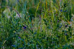 Ranek rosa na trawie z niciami sieć, Obrazy Stock