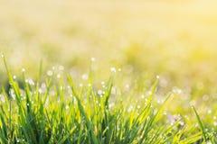 Ranek rosy krople na ostrzach zielona trawa, wschód słońca Zdjęcia Royalty Free