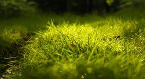 Ranek rosy krople na trawie zdjęcia royalty free