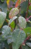 Ranek rosy krople Naturalny tło - Wodna kondensacja na roślina liściach - zdjęcie stock