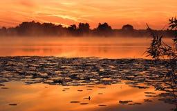 Ranek rzeka w lecie Fotografia Royalty Free