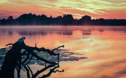 Ranek rzeka w lecie Fotografia Stock