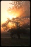 Ranek Słońce Obrazy Royalty Free