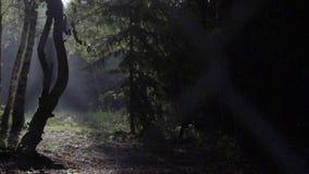 Ranek scena w lesie zdjęcie wideo