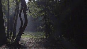 Ranek scena w lesie zbiory wideo