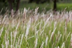 Ranek sceny krajobraz dzikiej trawy kwiat w łąkowym dmuchaniu w wiatrze dla tła i środowiska pojęcia zdjęcia stock