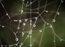 Ranek sieć Obraz Stock