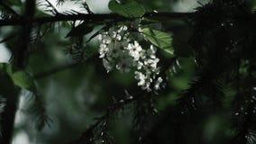 Ranek w brzoza lesie zbiory