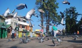 Ranek w Darjeeling centrum handlowym Zdjęcie Stock