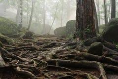 Ranek w głębokim lesie zdjęcia stock