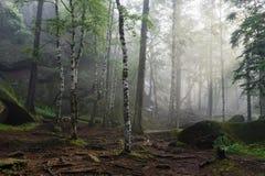 Ranek w głębokim lesie Zdjęcie Stock