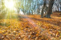 Ranek w jesień lesie Zdjęcia Stock
