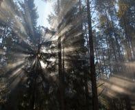 Ranek w lasowej mgle Obraz Royalty Free