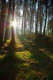 Ranek w lesie Zdjęcia Stock