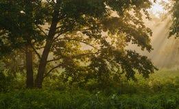 Ranek w lesie Zdjęcia Royalty Free