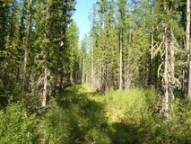 Ranek w lesie Zdjęcie Royalty Free