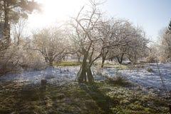 Ranek w nagłym śniegu ogródzie obraz stock