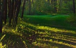 Ranek w ogródzie Fotografia Stock