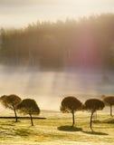 Ranek w polu golfowym Fotografia Royalty Free