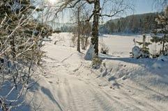 Ranek zimy las w górach Obrazy Royalty Free
