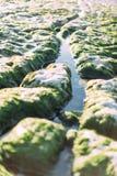 Rangée étonnante des pierres blanches érodées à marée basse, Etretat, Normandie, France Photographie stock libre de droits