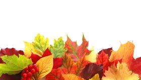Rangée colorée de feuilles d'automne formant une frontière Images libres de droits