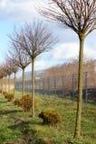 Rangée d'arbre Photo stock