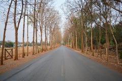 Rangée d'arbre entre la route Images stock