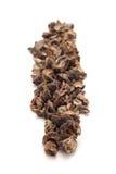 Rangée de groseille à maquereau sèche organique Photographie stock