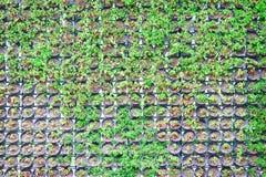 Rangée de nature de modèles de petites usines vertes ornementales dans le pot noir décoratif sur le fond de mur photo libre de droits