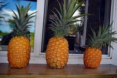 Rangée des ananas sur un filon-couche de fenêtre images libres de droits
