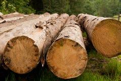 Rangée des arbres abattus Photographie stock