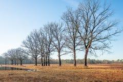 Rangée des arbres avec les branches nues sur la banque d'un simple images stock