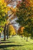 Rangée des arbres colorés d'automne en automne Image libre de droits