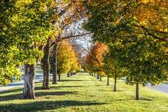 Rangée des arbres colorés d'automne en automne Images libres de droits