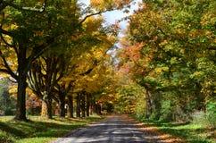 Rangée des arbres colorés le long d'une route de campagne Photo libre de droits