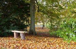 Rangée des arbres dans des couleurs d'automne Photos stock