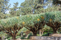 Rangée des arbres dans les jardins de BaronRothschild Image libre de droits