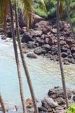 Rangée des arbres de noix de coco chez Rocky Coastline Images libres de droits