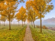 Rangée des arbres jaunes par le paysage rural photo stock
