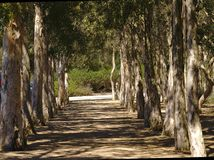 Rangée des arbres pendant la journée photographie stock