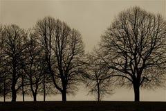 Rangée des arbres pendant le premier ressort par l'océan Photographie stock libre de droits