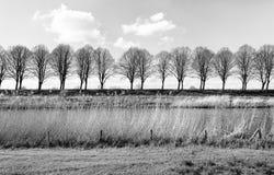 Rangée des arbres sans feuilles derrière la digue Images libres de droits