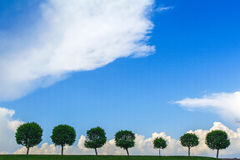 Rangée des arbres sous le ciel sombre arbre sept dans une ligne Photographie stock