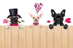 Rangée des chiens de valentines dans l'amour Photographie stock