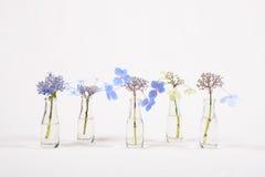 Rangée des fleurs bleues dans des pots en verre, cycle de la fleur à défraîchir Image stock