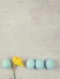 Rangée des oeufs bleus avec la jonquille Images stock