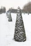 Rangée des pins sous la neige en Parc de Saint Cloud photographie stock
